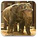 大象饲养所逃脱