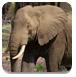 逃离野生大象森林