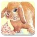 感恩节拯救兔子
