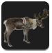 圣诞节拯救麋鹿