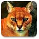 非洲金猫森林逃亡