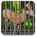 铁笼中的小鹿逃脱