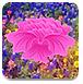 寻找奈良树花