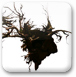 解密古老树根