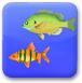 深海吃(chi)魚
