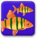 双人版大鱼吃小鱼