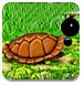 扔炸彈(dan)的(de)龜