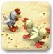 小鸡养殖场
