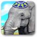 给大象洗澡